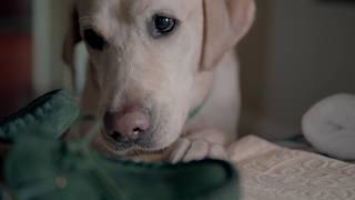 'Dog's Perspective' Commercial created for St. Vincent's Healthcare