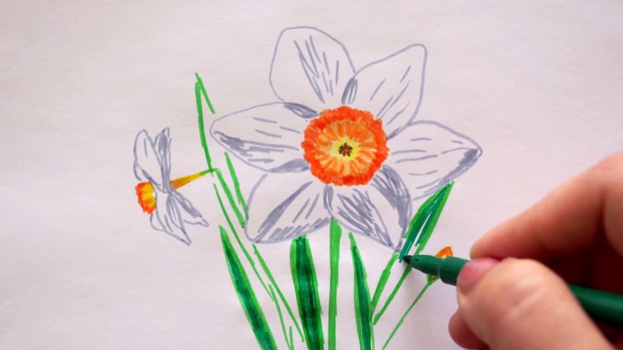 🏵 Narzissen zeichnen - Osterglocken malen - How to draw daffodils ...