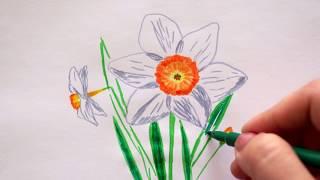 🏵 Narzissen zeichnen - Osterglocken malen - How to draw daffodils flowers - как нарисовать нарцисс