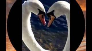 Chris Montez  -  Cuando el corazón está lleno de amor.