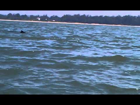 Dolphin ride Shiroda