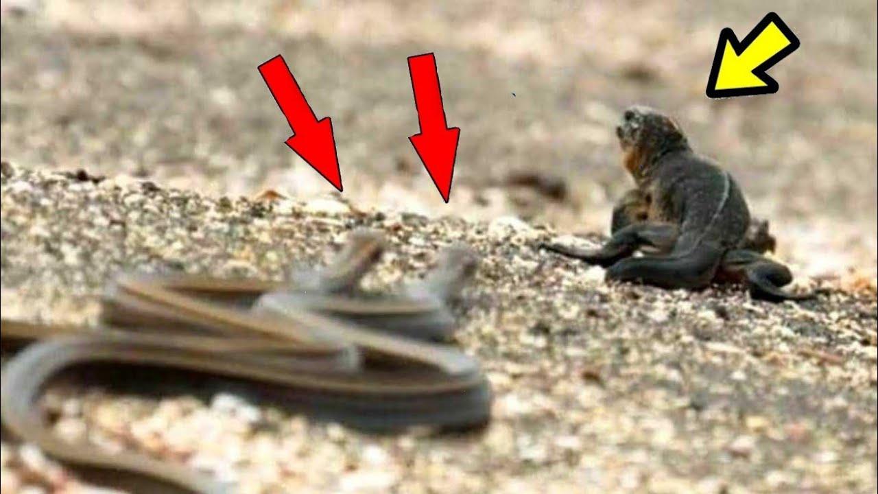 10 Animales Salvajes Cazando Sus Presas Ep 8 Si No Lo Vez No Lo Podrás Creer Youtube