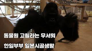한일부부 일본시골생활(동물원,육아,부침개)