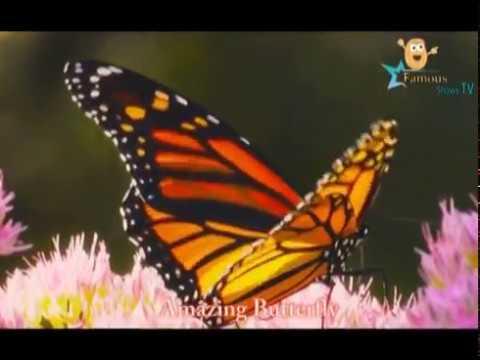 Beautiful Butterflies & The Best Relaxing Piano - Sleep Relaxing Music