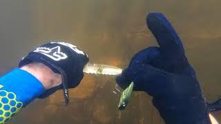 Random Finds - River Treasure - Snorkeling - STILLFIN