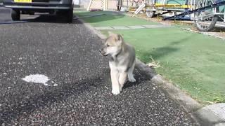 https://passerellewan.jp/puppies/?type=6.