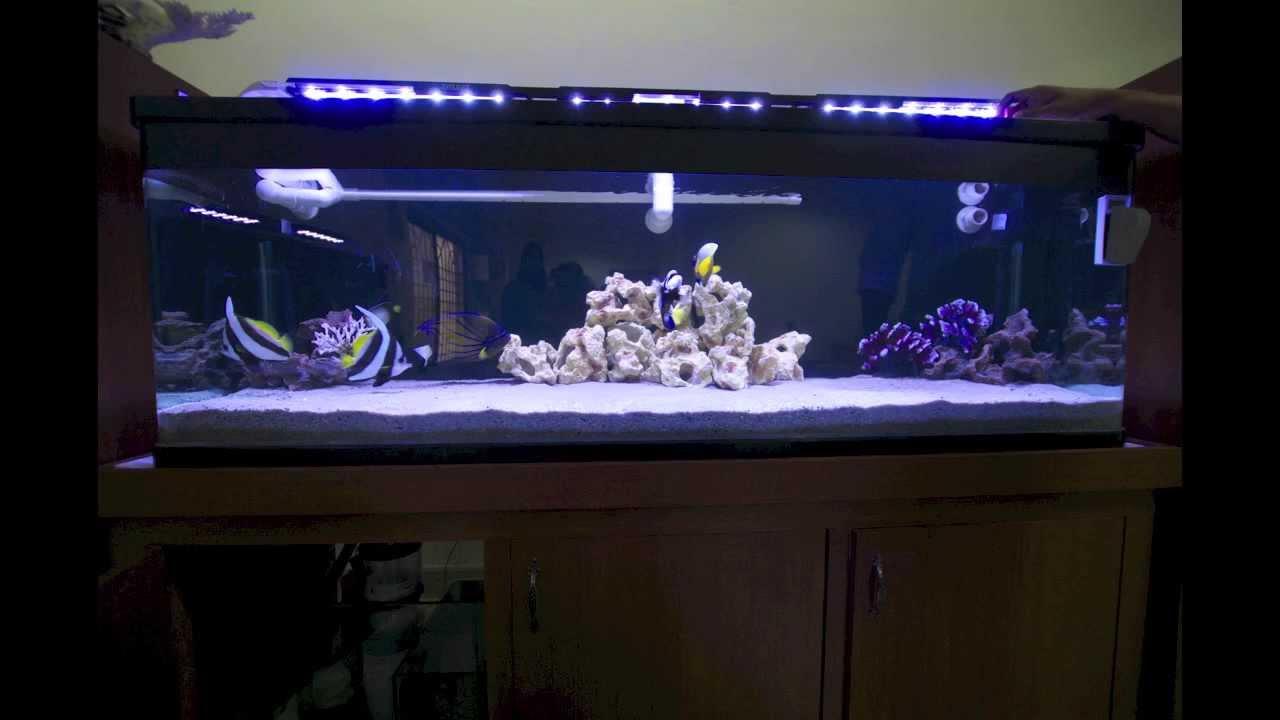 Fish aquarium in jayanagar - Oceanspace 6 Feet Tank