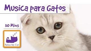 Música para Gatos y Gatitos - Música Relajante para los Gatos