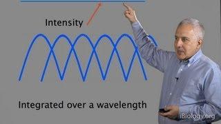 Microscopy: Diffraction (Jeff Lichtman)