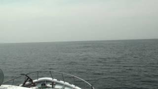 新婚旅行で行った北海道は羅臼町。宿泊した羅臼の宿まるみにオプションとしてあったのが、根室海峡ホエールウオッチングでした。 そのオプシ...