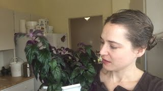 Studies show caring for many houseplants will help you stay healthy.