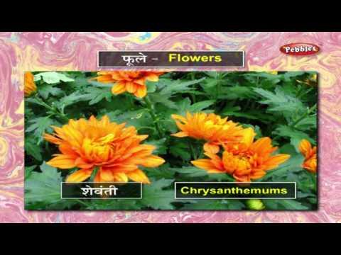 Learn Flowers In Marathi मर ठ