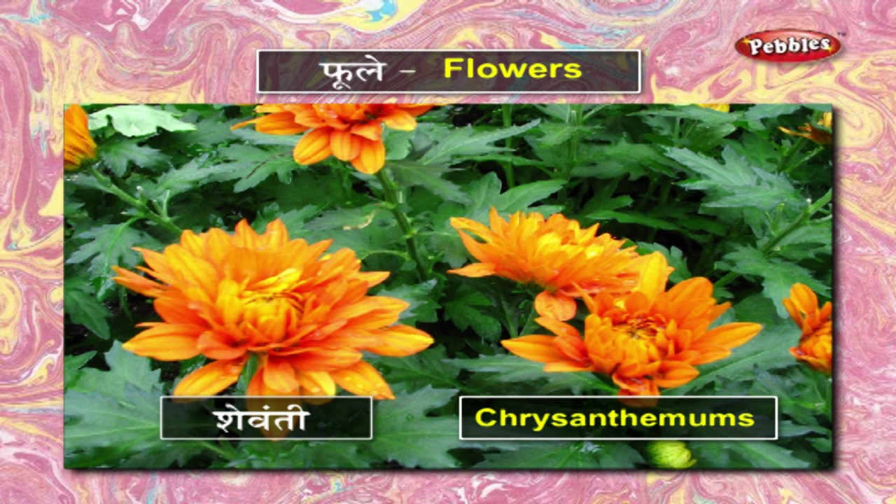 Learn Flowers in Marathi