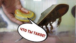 Ноябрьская поставка морских рыб и других гидробионтов