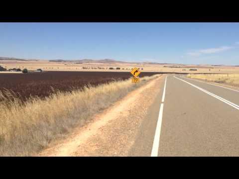 The wheat fields of Australia