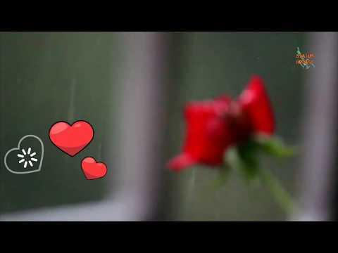 Aji jhoro jhoro mukhoro badolo dine - Rabindra Sangeet WhatsApp status video | Rabindra Status|