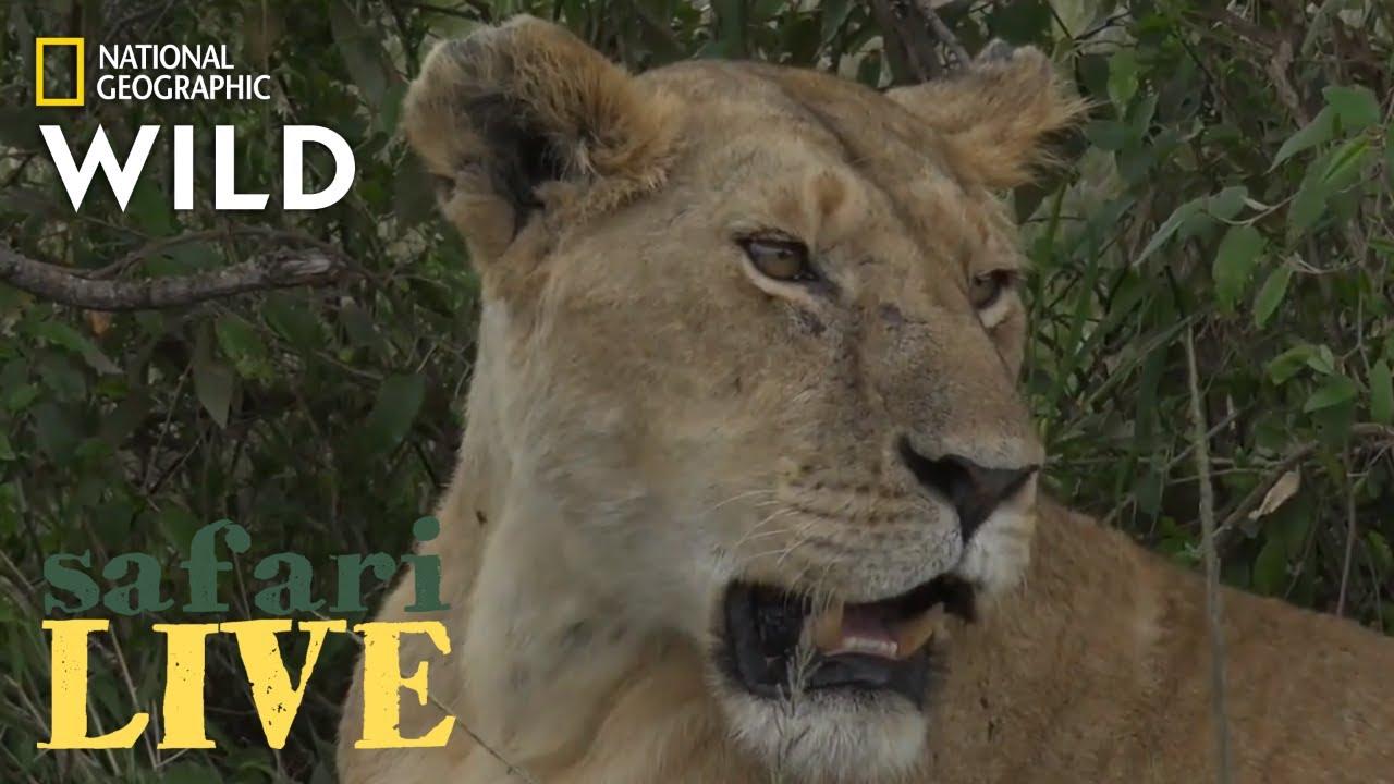 Safari Live - Day 221 | Nat Geo Wild