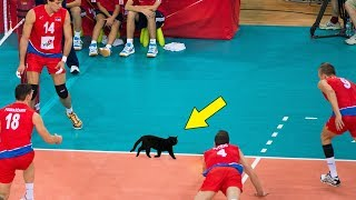 Funniest Moments in Volleyball History (HD)