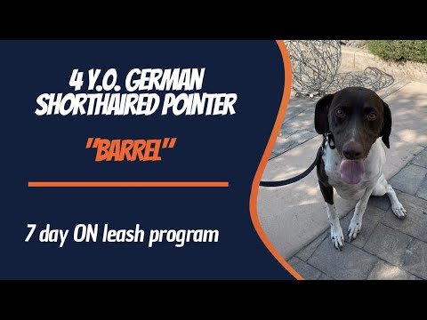 GERMAN SHORTHAIRED POINTER / DOG TRAINING