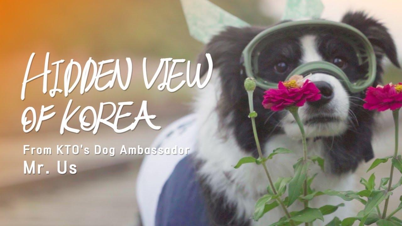 Hidden View of Korea: Meet KTO's Dog Ambassador, Mr. Us!