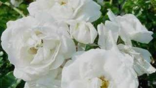 Repeat youtube video snow white flowers