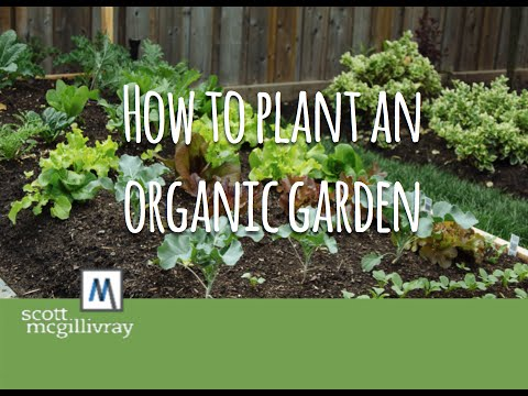 How to Plant an Organic Garden