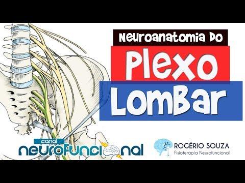 PLEXO LOMBAR - Nervos, Inervação Cutânea e Muscular - Rogério Souza