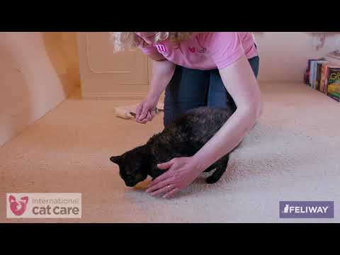 Helping your cat accept having its paws checked and its claws clipped