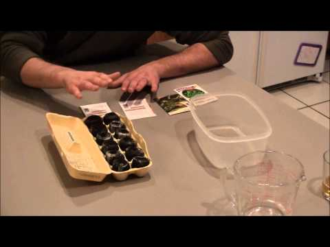 Germinating Seeds In Egg Cartons - The Easy Way