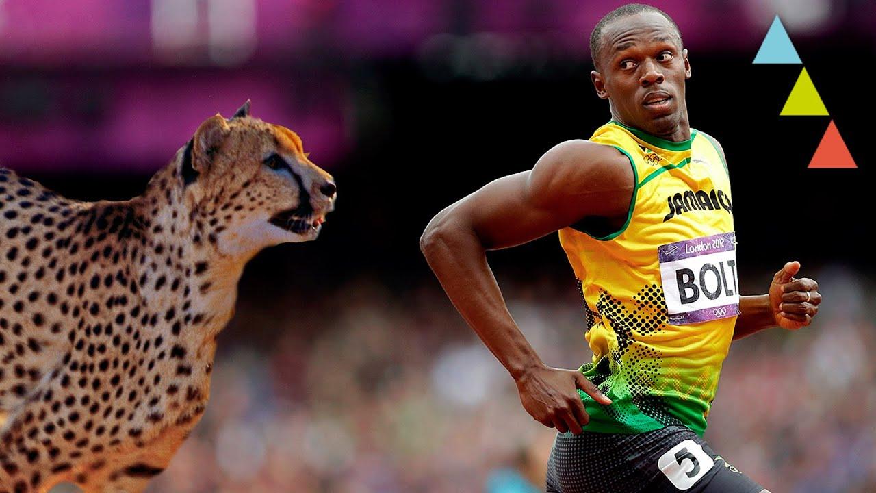 10 Animales Que Corren Mas Rapido Que Usain Bolt Youtube