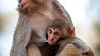 Explainer: Breast-Feeding in Prehistoric Times