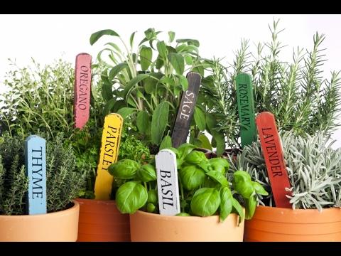 Вопрос: Какие специи хорошо растут на балконе?