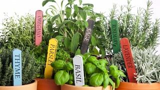 видео Как вырастить базилик на подоконнике: особенности выращивания в домашних условиях