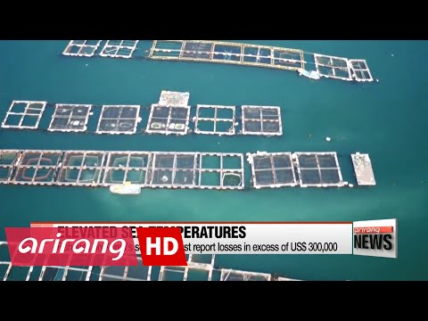 Heatwaves cause massive losses in South Sea fisheries