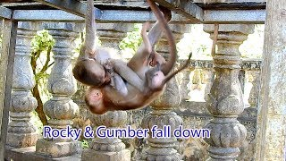 OMG Baby Rocky So Stronger Biting With Baby Gumber Until Fall Down
