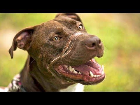 Эта собака ПЕРЕЖИЛА ужас! Ей замотали пасть СКОТЧЕМ, но она…