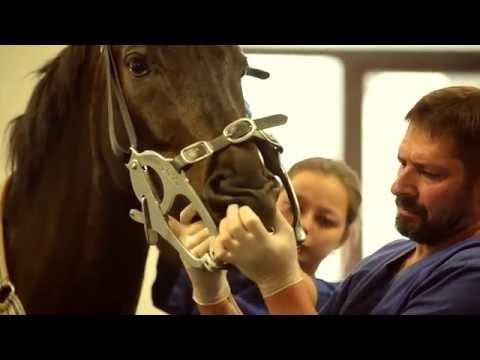 Как определить возраст лошади по зубам видео