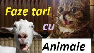 faze tari cu animale