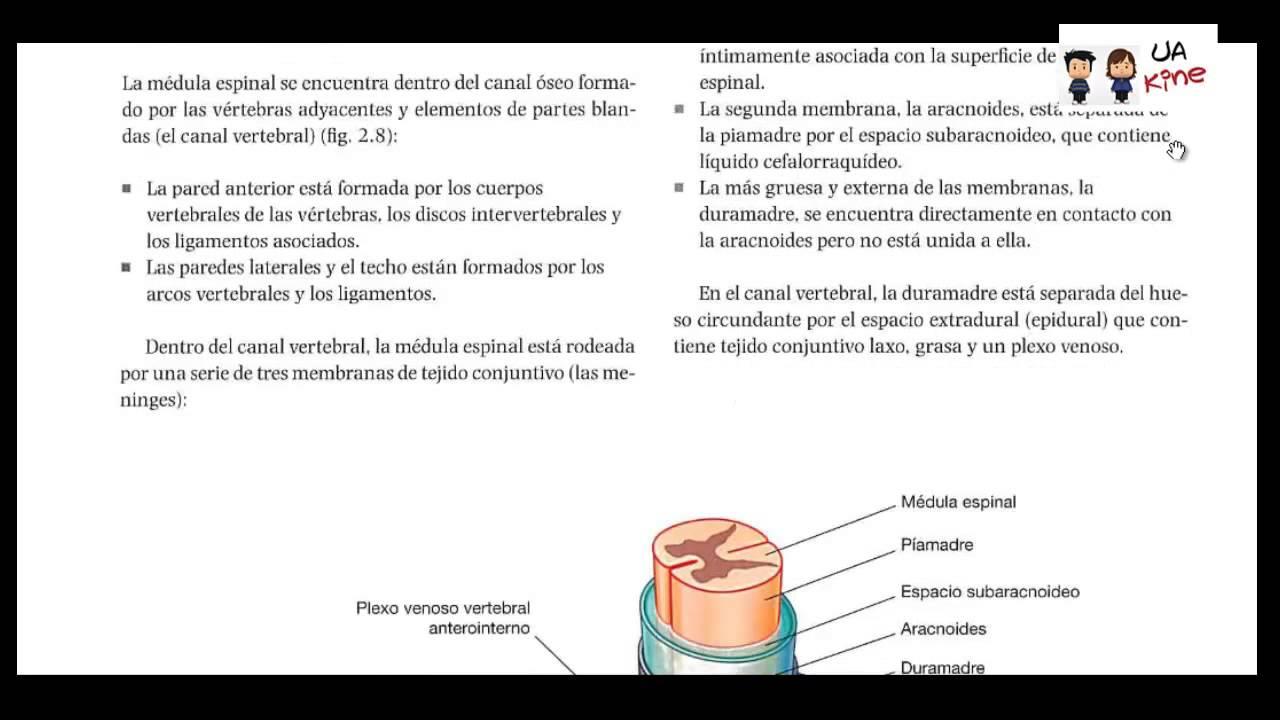 Anatomia - Canal Vertebral - YouTube