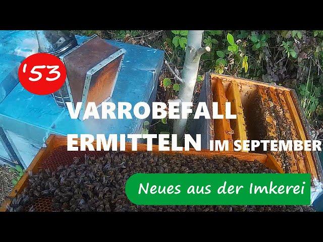 Aktueller Varroabefall/ Füttern - Neues aus der Imkerei#53