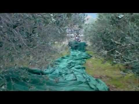 Avvolgitore reti olive con Aspiratore CRF 2012