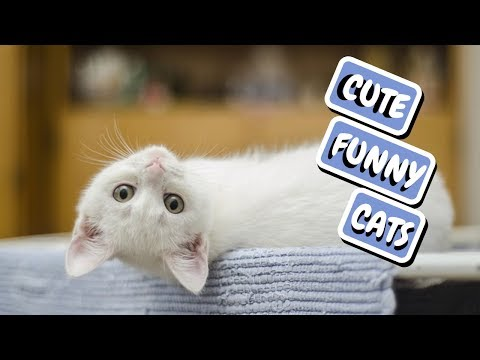 Cute Cat Compilation – Funny Cats 2019