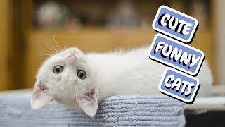 Cute Cat Compilation - Funny Cats 2019