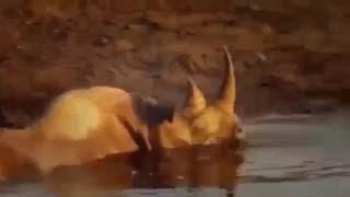 最も驚くべき野生動物の攻撃、ライオン、サイ、ゾウ、クロコダイル2. 最...