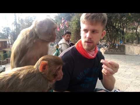 Шустрые обезьянки в