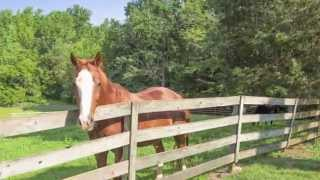 NC Horse Horse Farm in Bahama