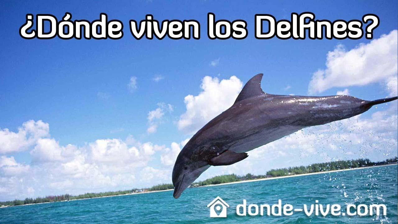 D nde viven los delfines la respuesta aqu youtube - Donde viven los acaros ...