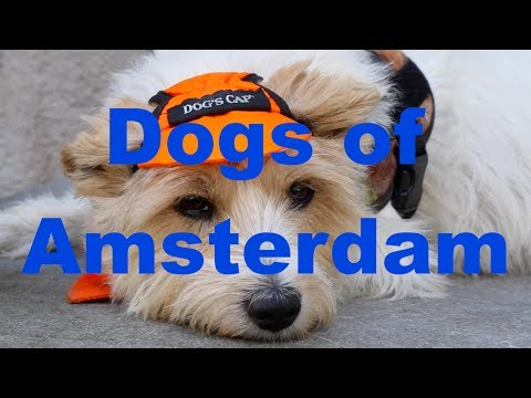 Meet the dogs of Amsterdam Dutchified