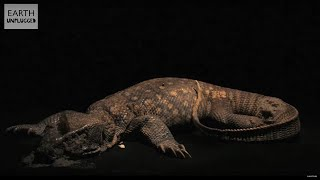 Time Lapse - Lizard Decomposition - BBC Earth Unplugged