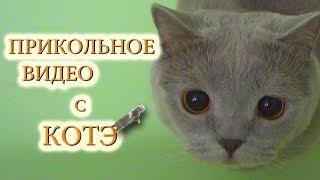 Приколы с котами ТОП подборка с нашим котом